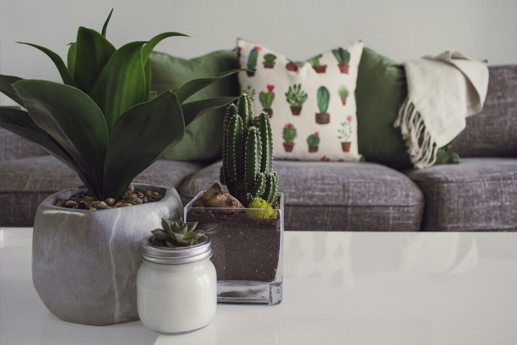 A picture of plants with furniture and pillows