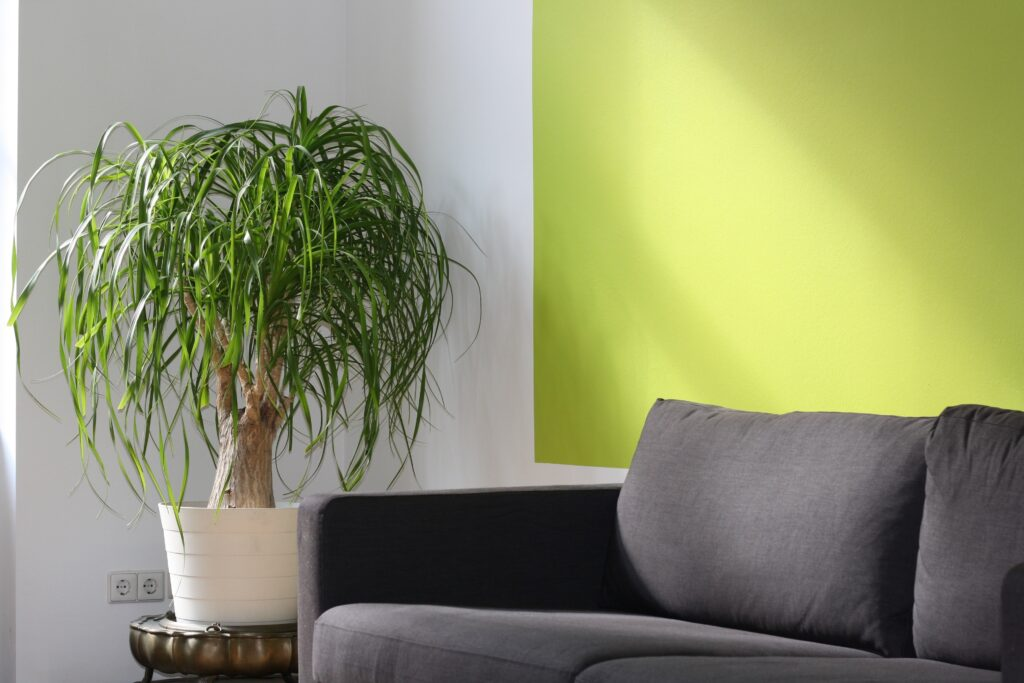 Gray furniture with plants beside