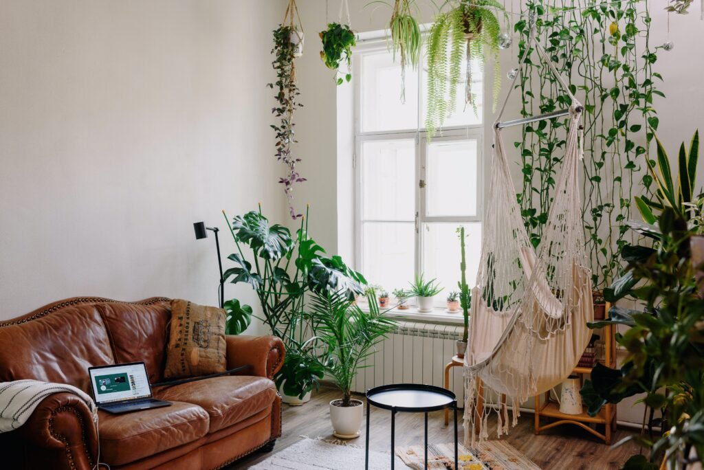 A living room with sofa and hanging plants
