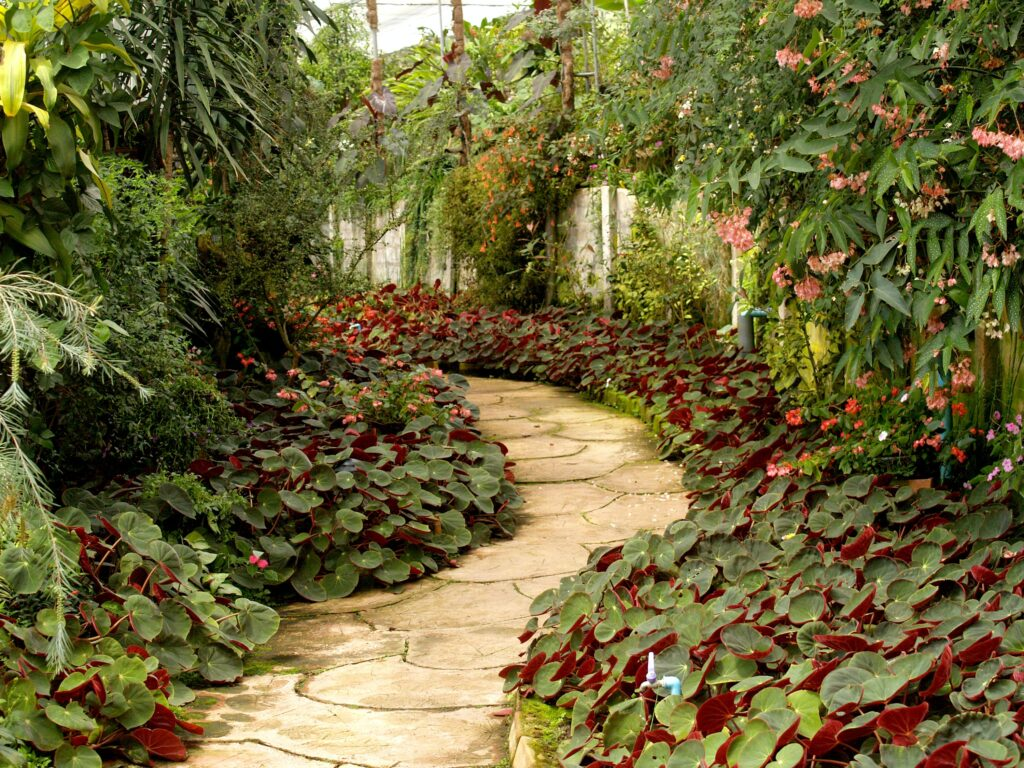 Garden path with pattern on path